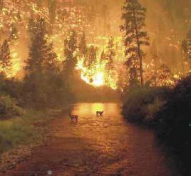 forest%20fire.jpg